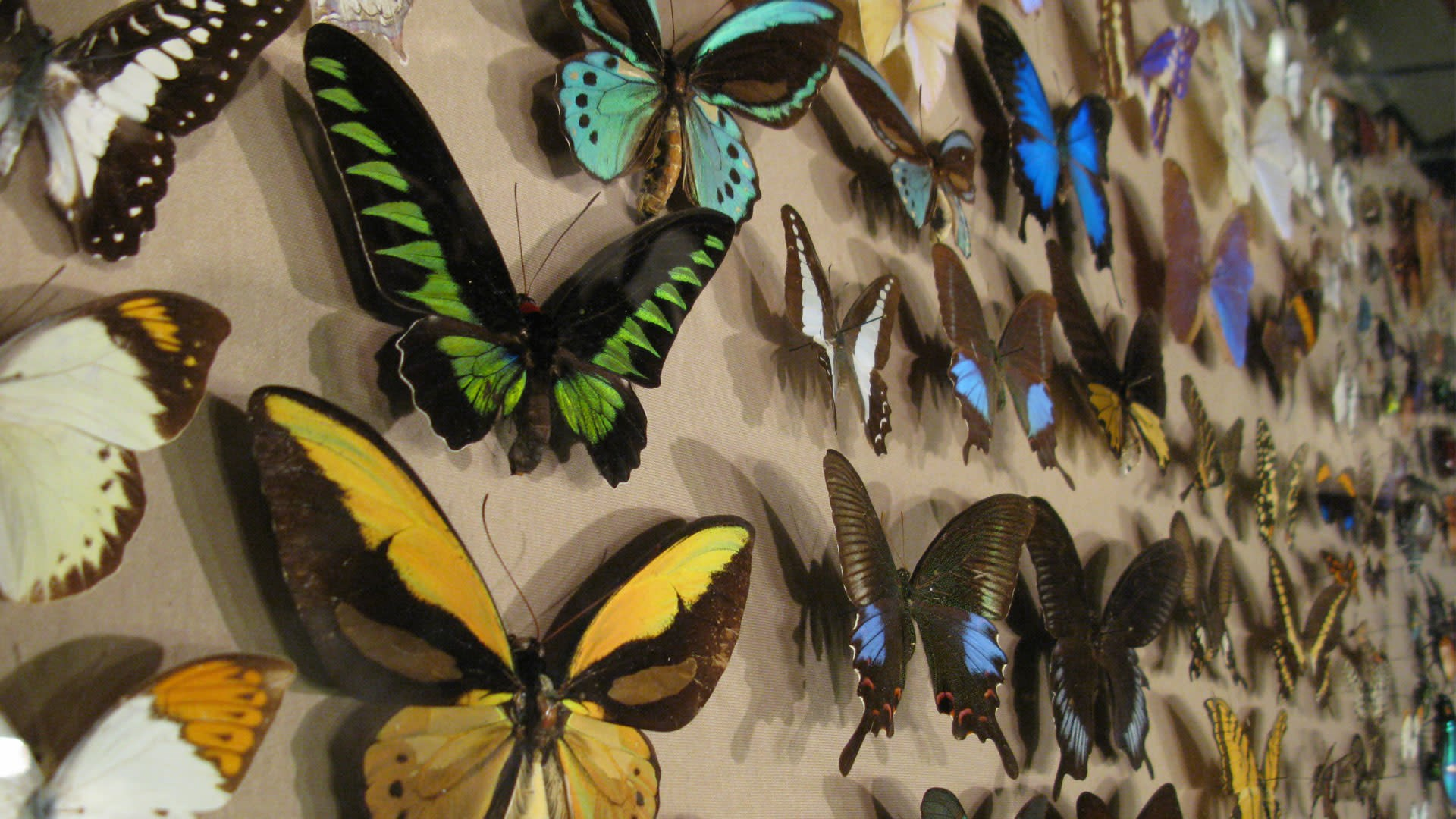 Butterflies on display